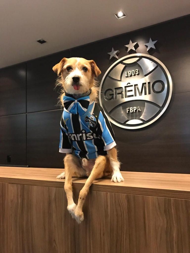 cachorro vestido com a camisa do Grêmio
