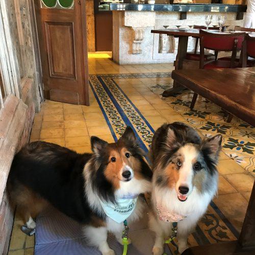 duas cachorras do lado da mesa