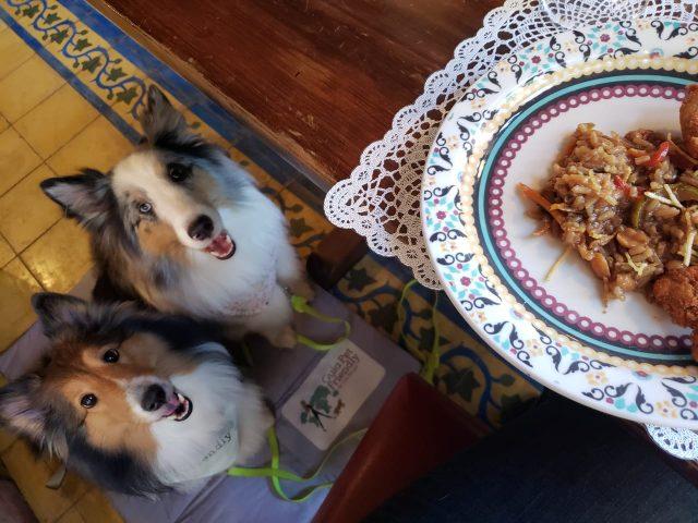 dois cachorros olhando para prato de comida