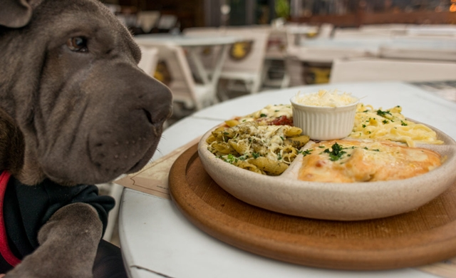 cachorro olhando para prato de massa