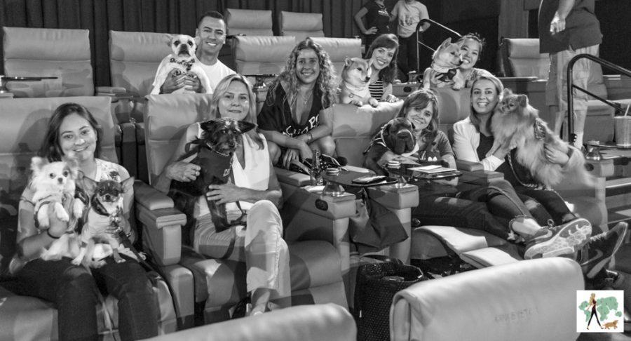 pessoas e cachorros dentro de sala de cinema
