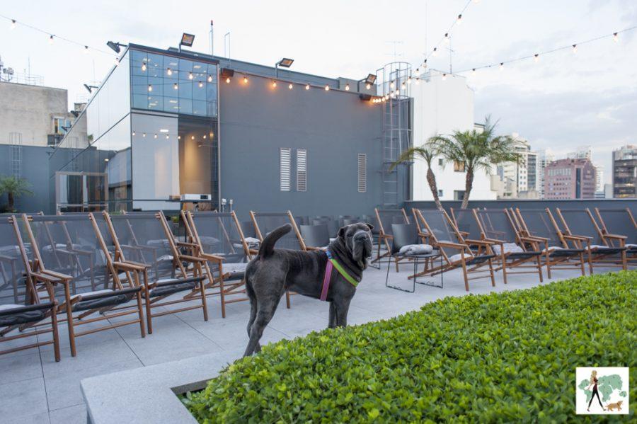 cachorro olhando e cadeiras de piquenique ao fundo