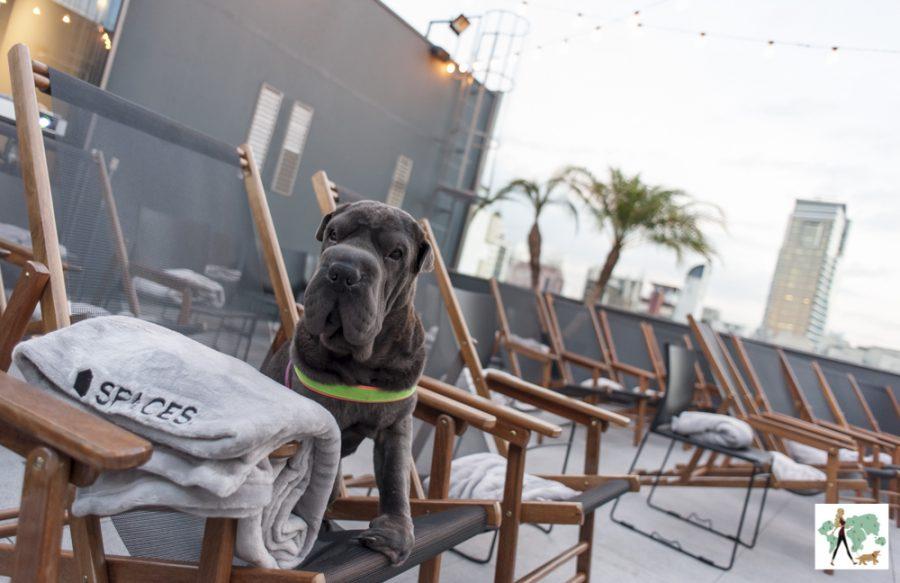 cachorro em cima da cadeira de piquenique