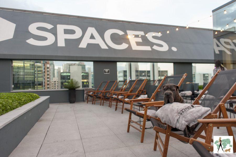 rooftop do Spaces com cachorro