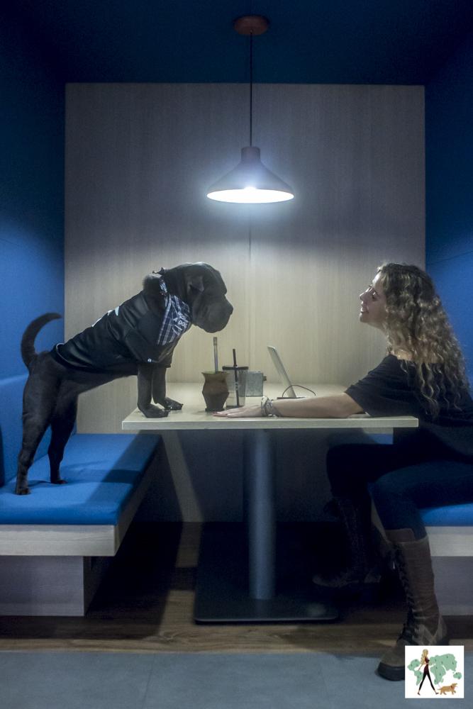 cachorro e mulher no Spaces