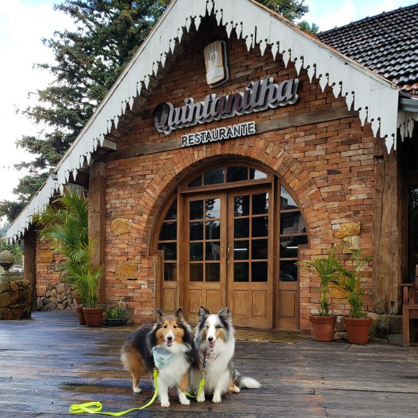 dois cachorros sentados em frente a casa de madeira
