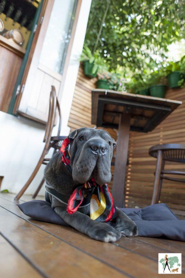 cachorro sentado em deck de restaurante