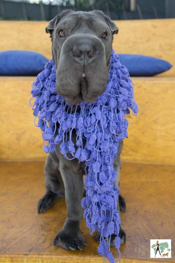 cachorro com cachecol