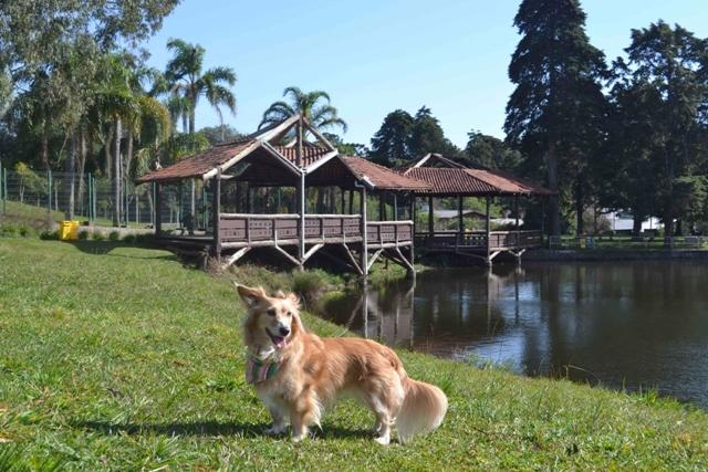 cachorro no gramado e um lago atrás