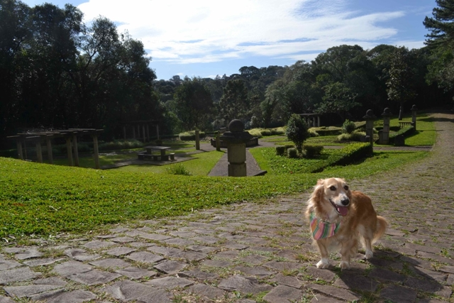 cachorro na frente de um jardim