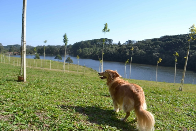 cachorro na frente de um lago