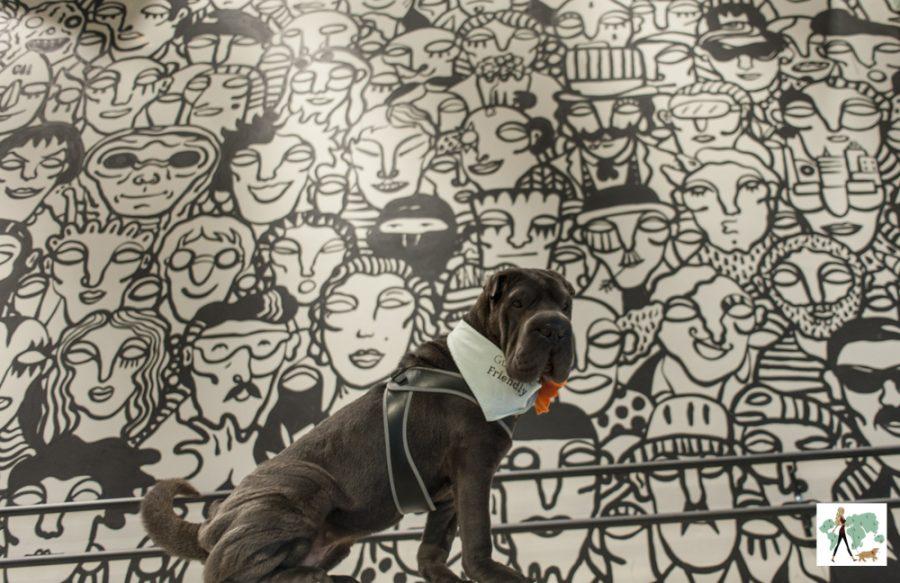 cachorro em frente a uma parede