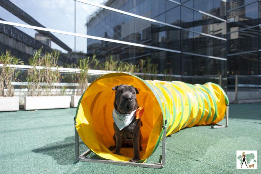cachorro dentro de tuinel