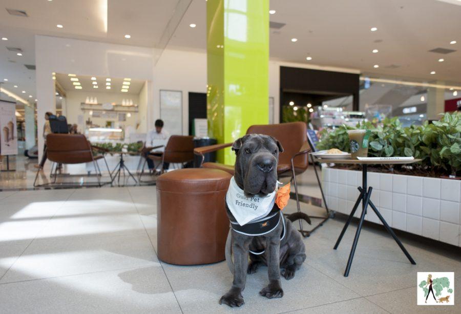 cachorro sentado no shopping