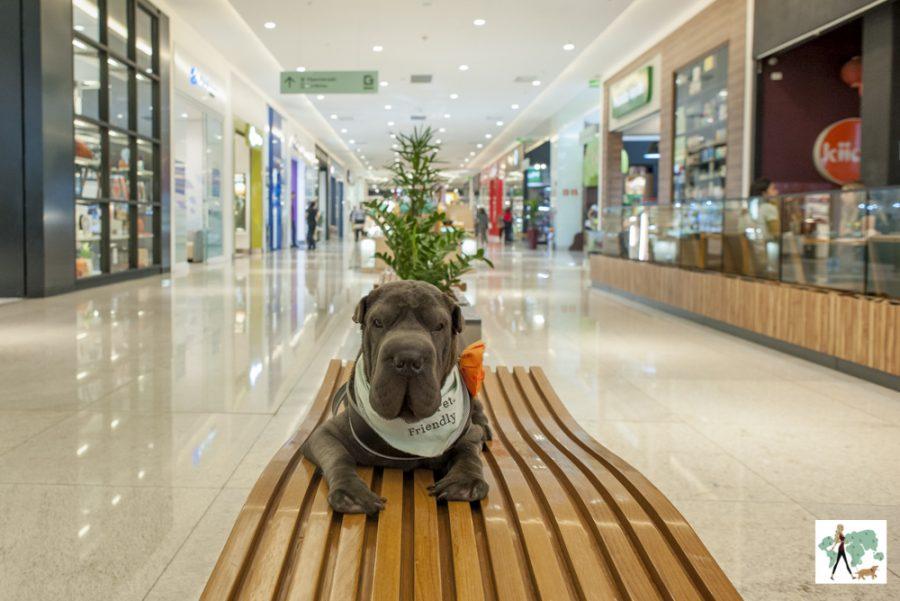 cachorro deitado no banco do shopping