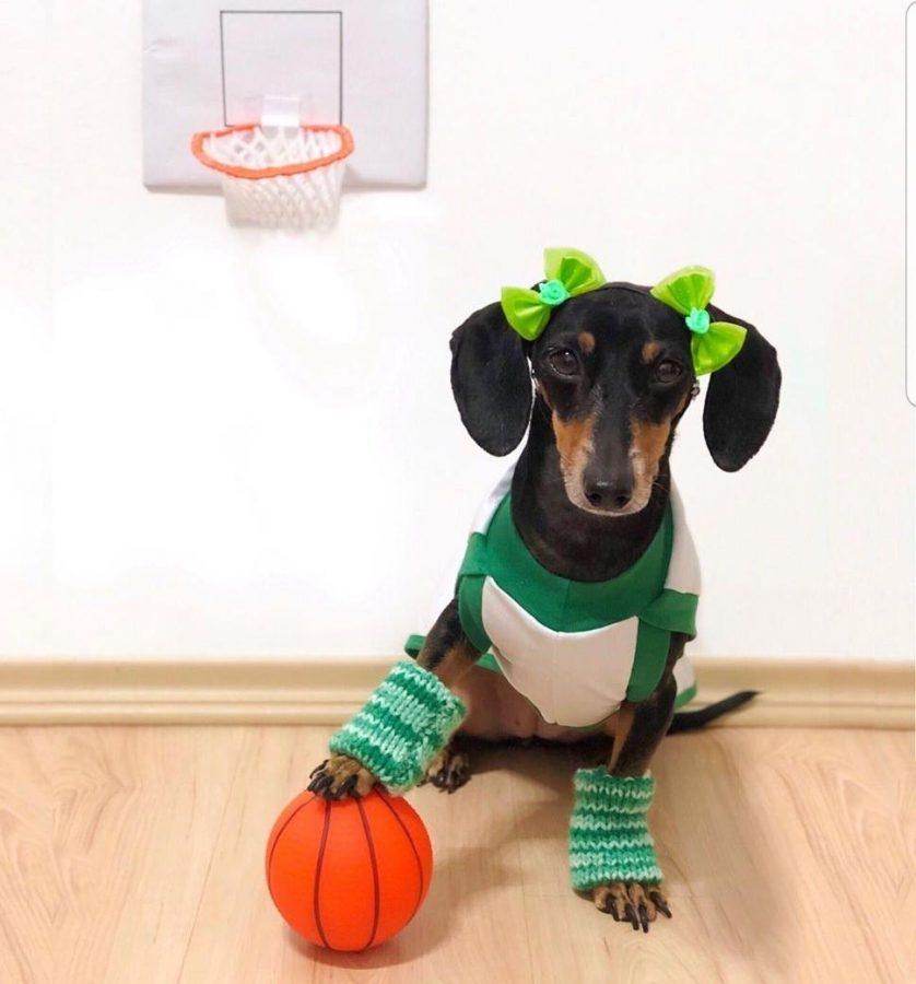 cachorro com roupa de jogador de basquete