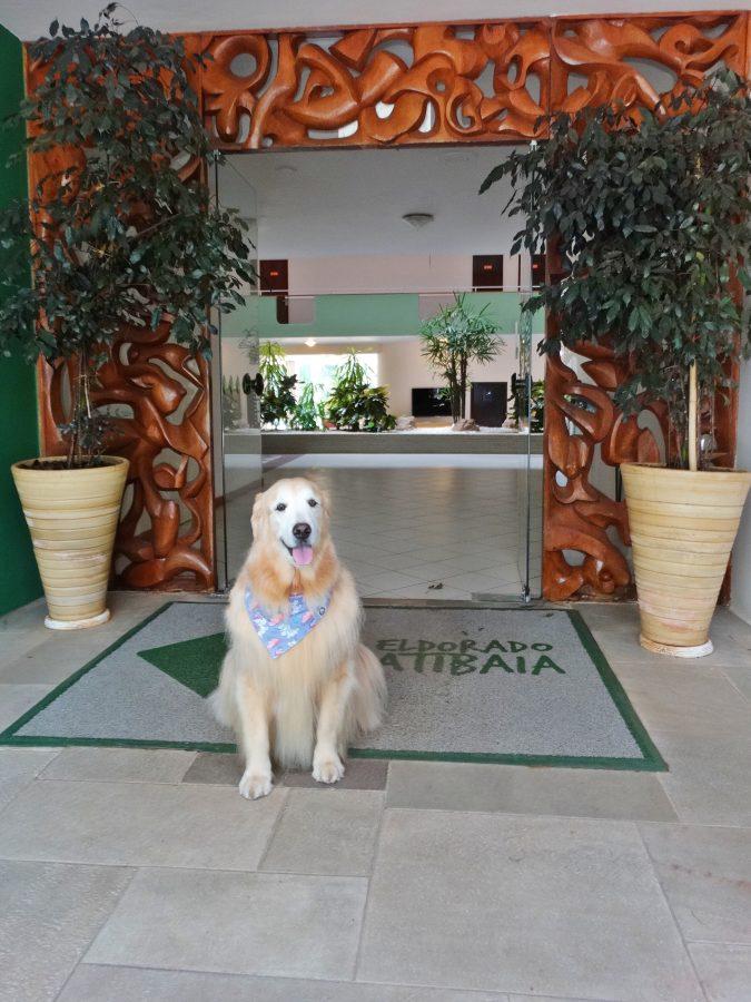 cachorro sentado na entrada do resort