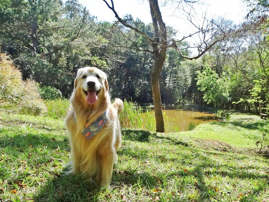 cachorro na área verde