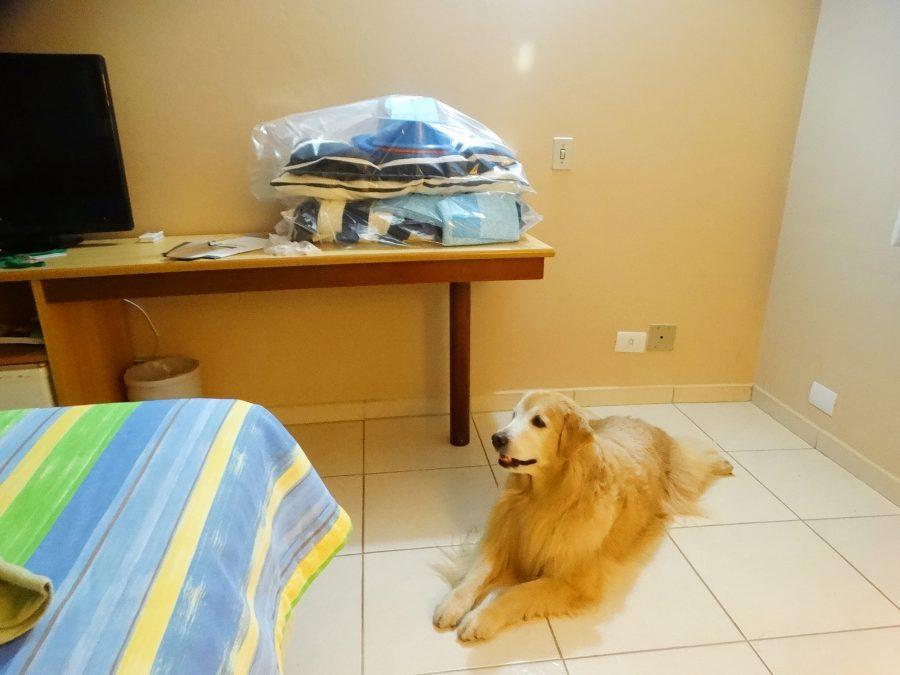 cachorro deitado no chão do quarto