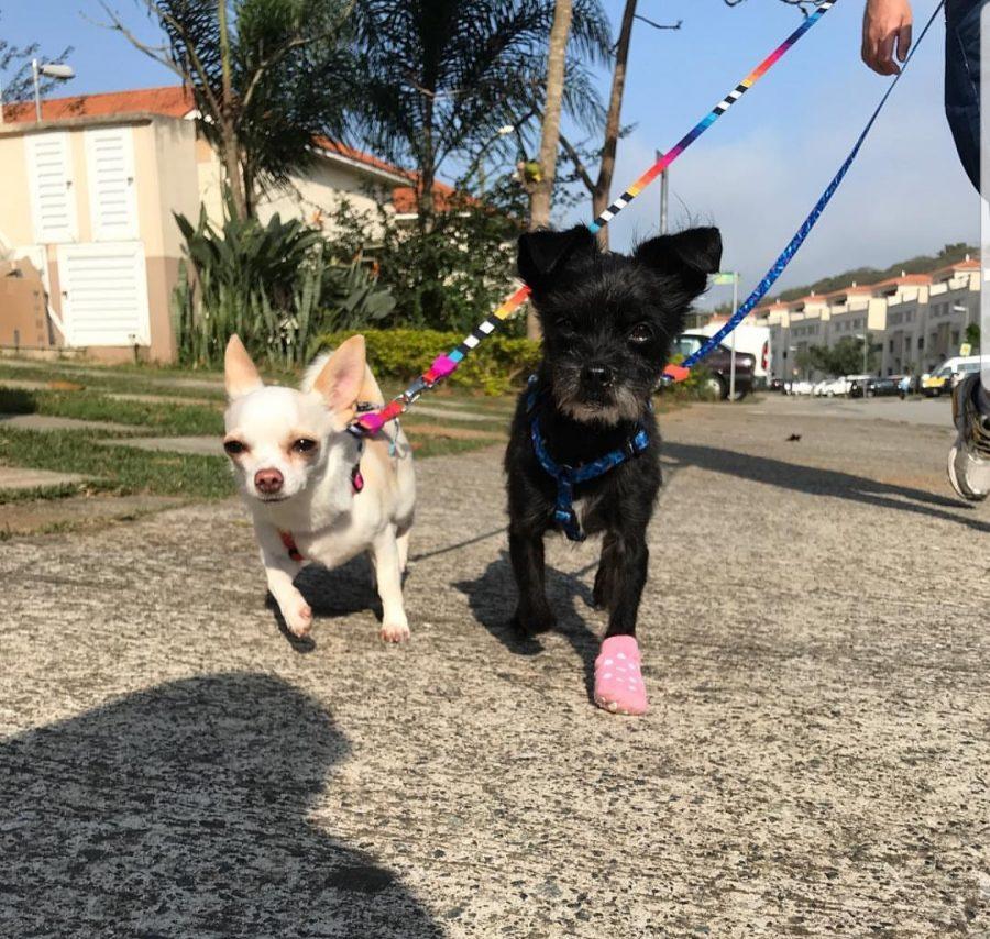 dois cachorros passeando