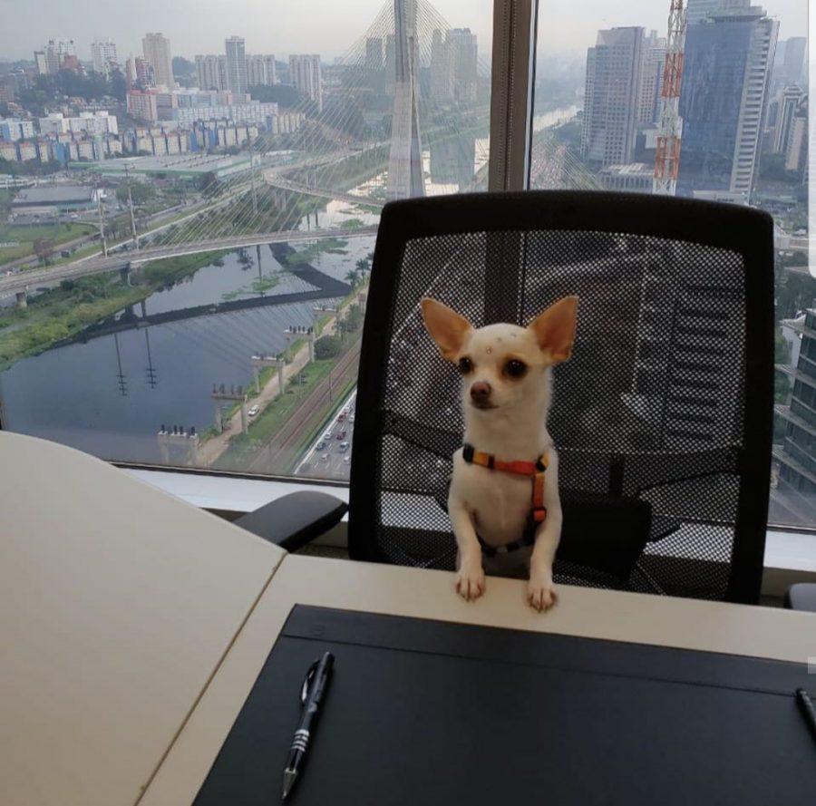 cachorro sentado na sala de reunião