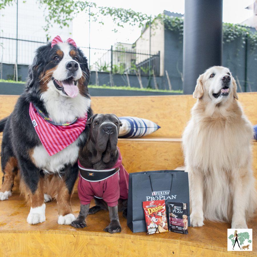 cachorros com kit da nestle purina