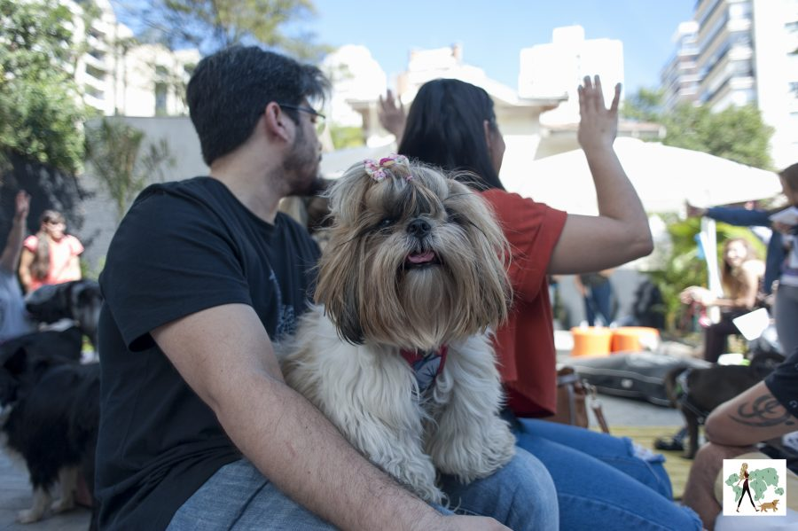 cachorro sentado no colo de homem e mulher com a mão para cima