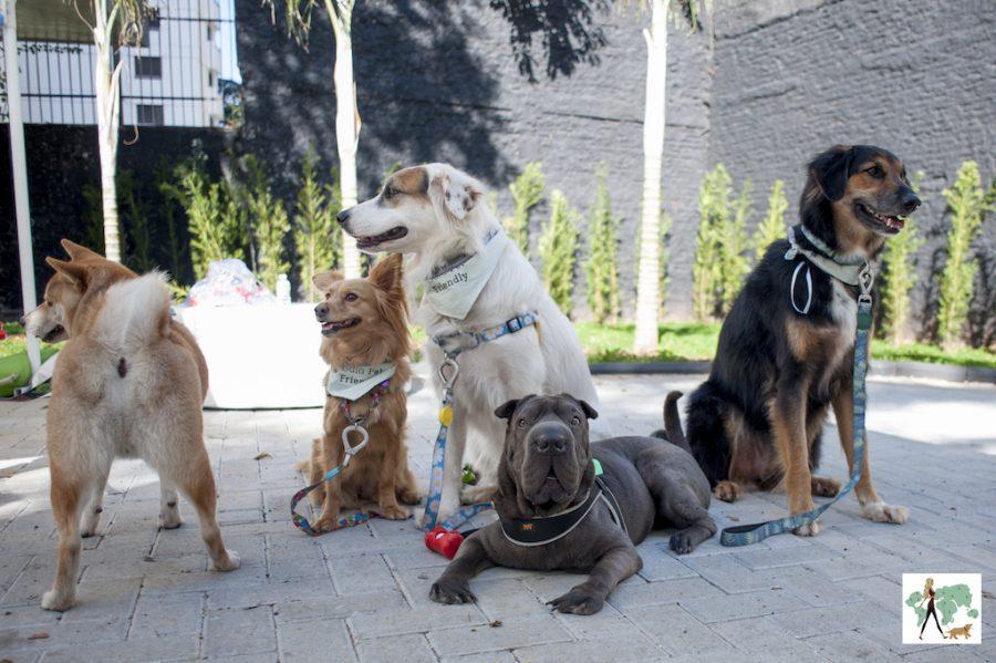 cachorros do Guia Pet Friendly