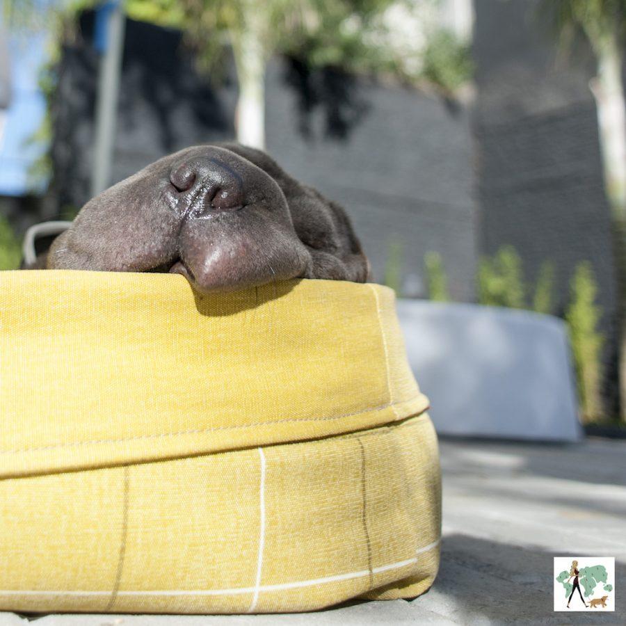 cachorro bochechudo dormindo em uma caminha