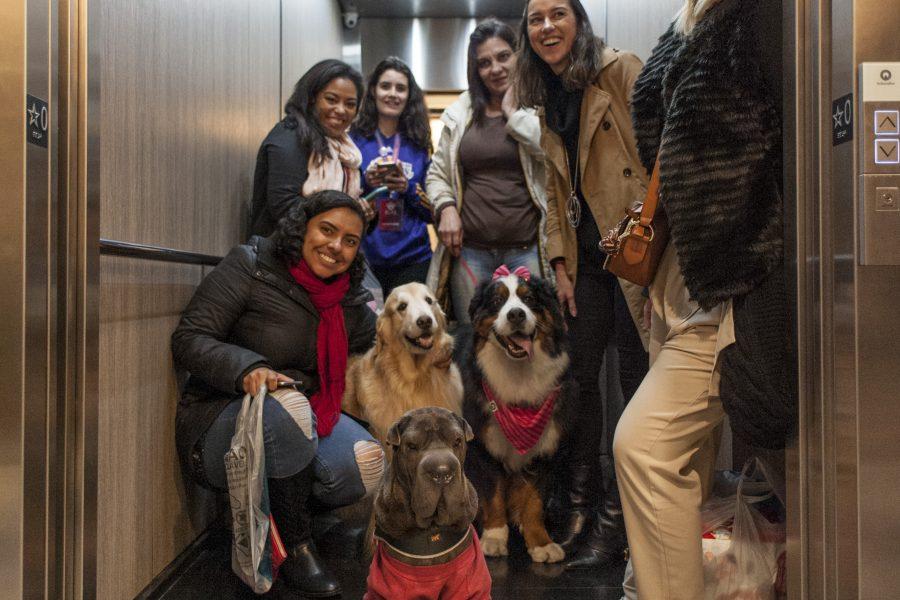 cachorros e humanos posando para foto no elevador