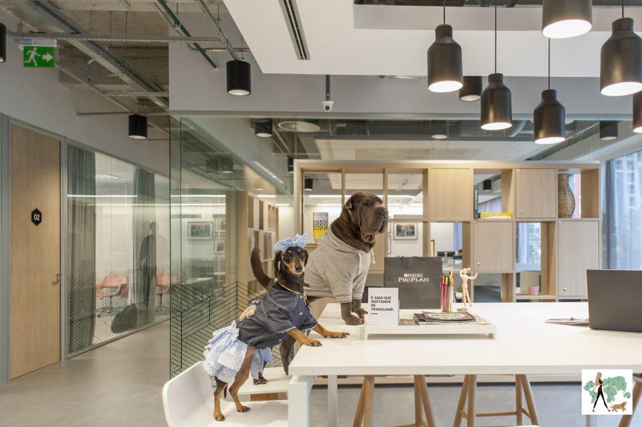 cachorras em cima de mesa do Spaces Berrini