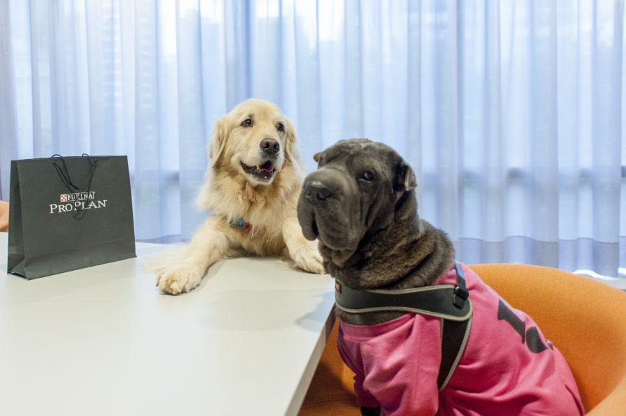 cachorros no coworking Spaces Berrini