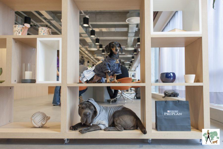 cachorros na prateleira de coworking