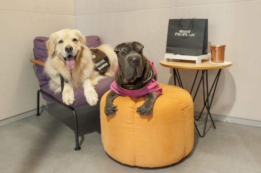 cachorros em cima de cadeira e banco no Spaces Berrini