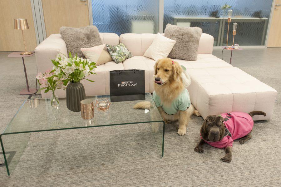 cachorras sentada no Spaces by Fabiana Scaranzi