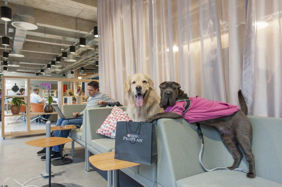 cachorros em cima do sofá