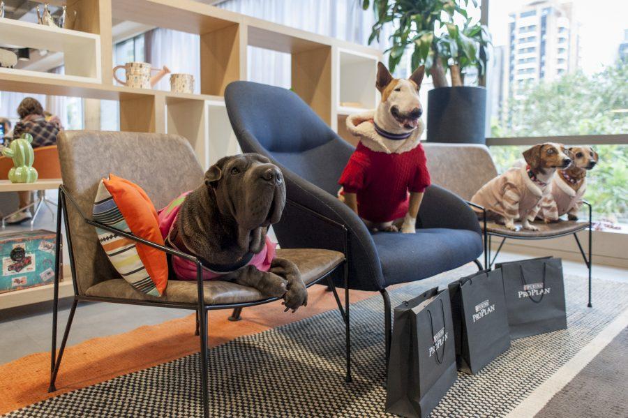 cachorros sentados em cima de cadeiras