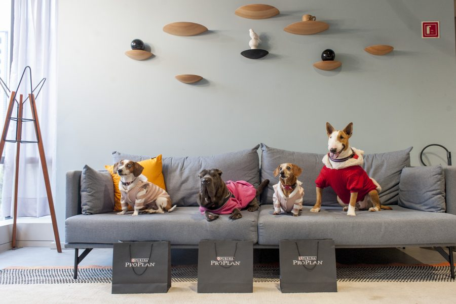 cachorros em cima de sofá
