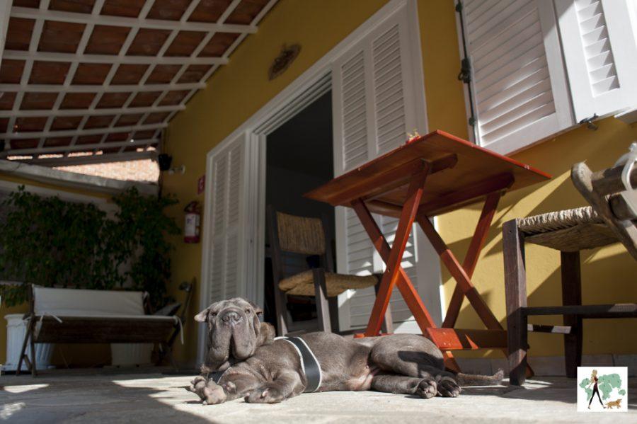 cachorro deitado na varanda da pousada Moa