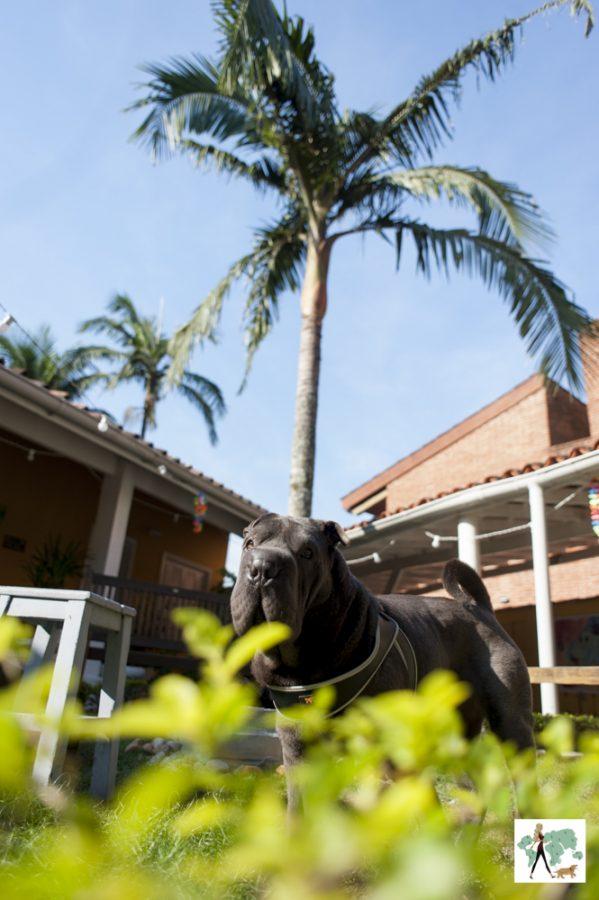 cachorro no meio de jardim com palmeira ao fundo
