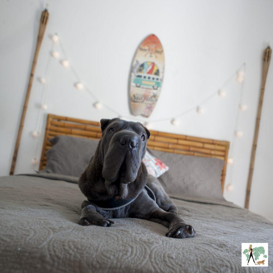 cachorro em cima de cama de pousada