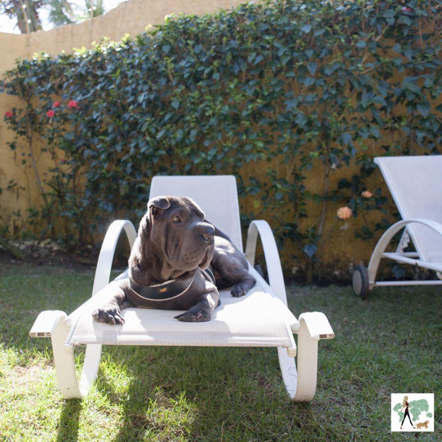 cachorro em cima de espreguiçadeira