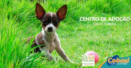 imagem de cachorro com os dizeres centro de adocão cobasi pompéia