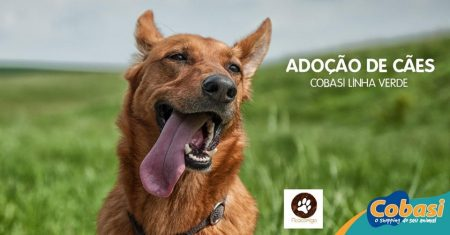 imagem de um cachorro com dizeres adoção de cães cobasi linha verde