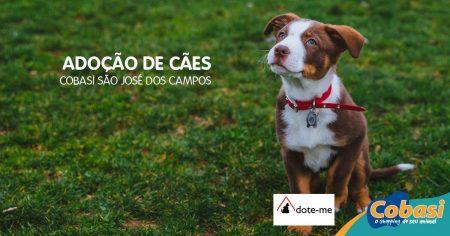 imagem com cachorro e dizeres adoção de cães