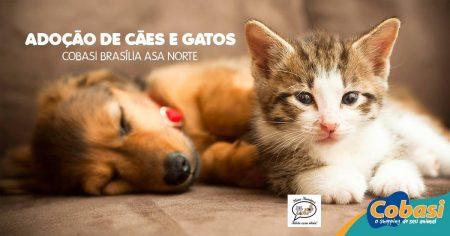 imagem com um cachorro e um gato com os dizeres adoção de cães e gatos cobasi asa norte