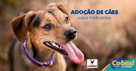 imagem de um cachorro com os dizeres adoção de cães cobasi ponta grossa
