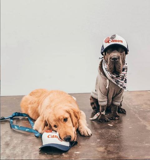 cachorros na bienal da foto