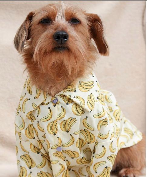 cachorro com camisa de banana