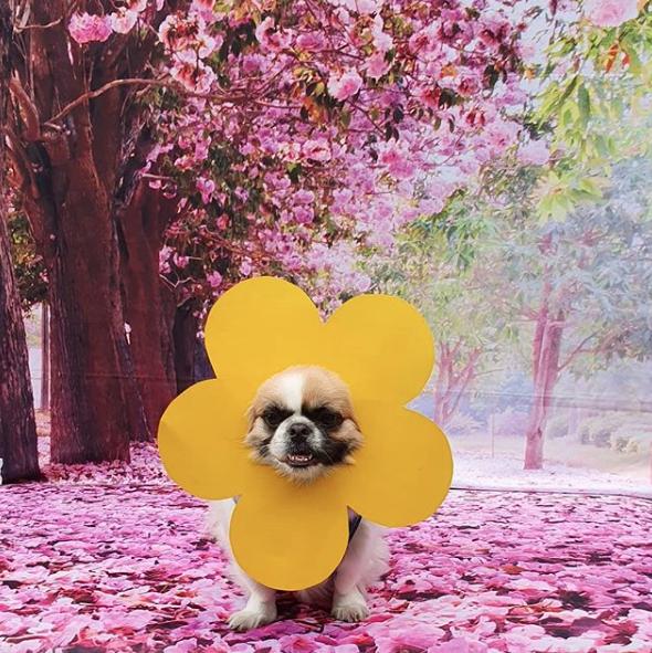 cachorro com flor na cabeça